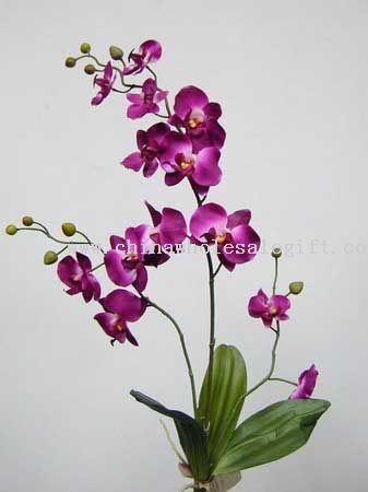 Cymbidium-Orchid-12015977953.jpg