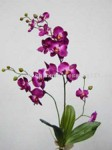 Cymbidium Orchid small picture
