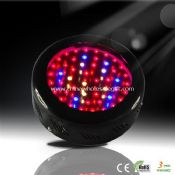 50pcs 1W Led Grow Light