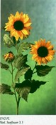 Med. Sunflower images