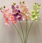 Single Orchid images