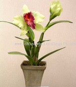 Orchid Planter images