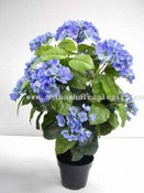 Hydrangea Tree W/Pot images