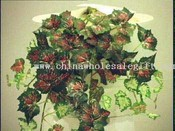 Mini Rex Begonia Vine images