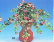 Mini guzowate Begonia Bush images