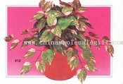 Pothos Philo Bush images