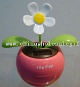 Solar swing flower images