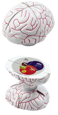 Picture Brain