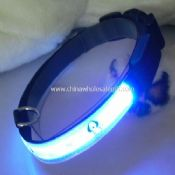 led glowing dog collar images