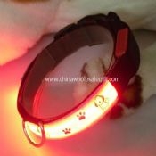 lighting up dog collar images