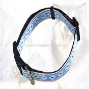 Pet collars images